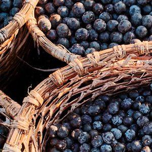 Blueberries in baskets